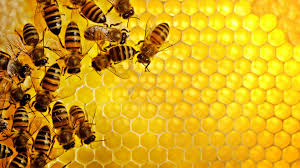 best 39 bee backgrounds on