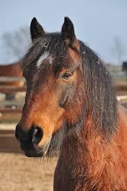 Redwings Horse Sanctuary - Ada Cole