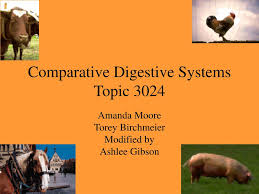 PPT - Comparative Digestive Systems Topic 3024 PowerPoint Presentation -  ID:3875660