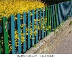 Fence Paint Flowers Stock Photos Images Photography Shutterstock