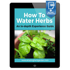 how to water herbs an in depth