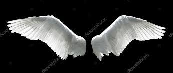 angel wing wallpaper angel wings