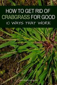 allotment bbc crabgrass doentary
