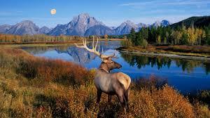 elk wallpaper 51 images