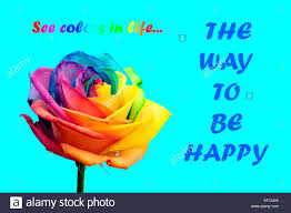 rainbow rose flower and multi colored petals quotes be happy and