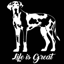 Pin On My Love For Great Danes