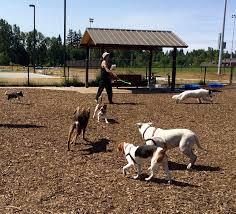 Got Dogs Explore 7 Off Leash Options In Bellingham Whatcomtalk