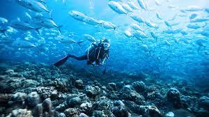 Дайвінг у Домінікані. Атлантика | Феєрія