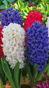 Resultado de imagen de bulbos de flor