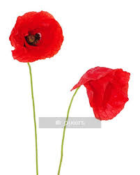 Red Poppies Wall Decal Pixers We Live To Change