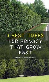5 Best Trees For Privacy That Grow Fast Gardeners Guide