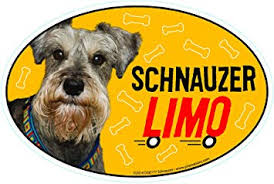 Amazon Com Prismatix Decal Schnauzer Car Magnets Schnauzer Limo On Board Oval 6 X 4 Auto Truck Refrigerator Mailbox Funny Car Decals Dog Magnet Schnauzer Automotive