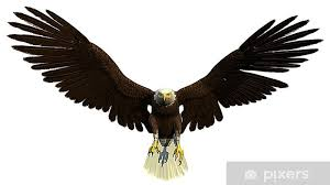 American Bald Eagle Front Wall Mural Pixers We Live To Change