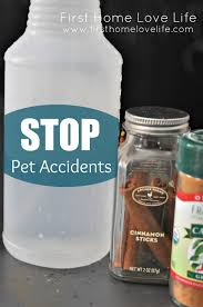 how to stop pet accidents first