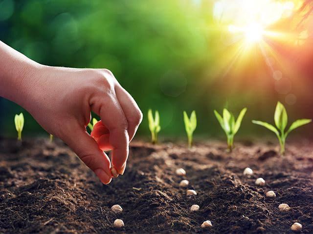 """Resultado de imagem para We plant the seed; God gives the harvest."""""""