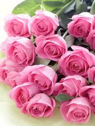 ورورد رائعه باللون البينك صور ورود خلابة باللون الوردى الجميل