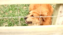 185 Vicious Dog Barking Videos And Hd Footage Getty Images