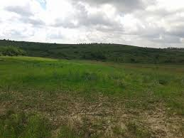 Прокуратура вимагає повернути у розпорядження держави землю, яку орендар в Марківському районі використовував не за цільовим призначенням