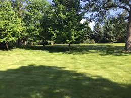 lush green lawn or a dog