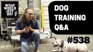 Stop Dogs From Fence Charging Training A Biting Dog What Would Jeff Do Dog Training Q A 538 Youtube