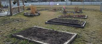 Gallery – Varsity Community Garden