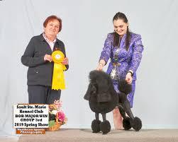 news umbra poodles