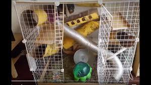 diy customizable chinchilla cage