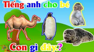 Con gì đây | nhạc thiếu nhi vui nhộn | từ vựng | con đà điểu | chim cánh  cụt