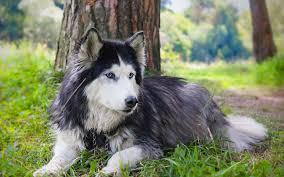 صور كلاب بجودة Hd خلفيات كلاب ميكساتك