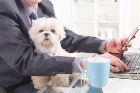 Venerdì giornata mondiale del cane in ufficio