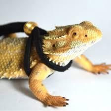 bearded dragon leash reptile adjustable