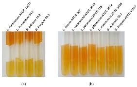 in vitro antimicrobial activity and