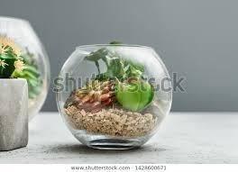 small garden succulent plants glass