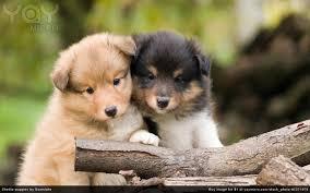 best 41 puppy love desktop backgrounds