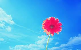 pink flowers wallpaper hd