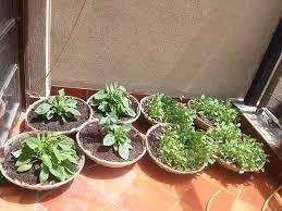 kitchen gardens edible routes