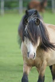Elvis is one of the centre's gorgeous adoption ponies - Picture of Redwings Ada  Cole, Nazeing - Tripadvisor