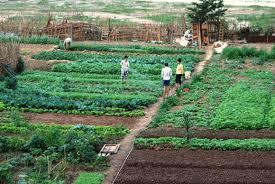 urban agriculture in hanoi vietnam