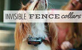 Dog Accessories Page 3 Caninejournal Com