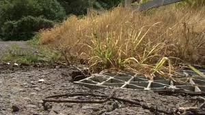 Vallejo suspends herbicide spray program on Mare Island - ABC7 San Francisco