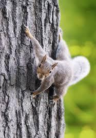 squirrels ate my screens mccann