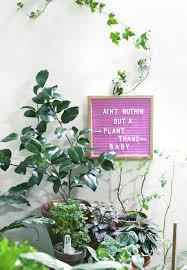 fairytale slavery letterboard quote indoor plants houseplants
