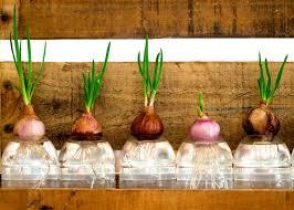 grow a year round hydroponic garden