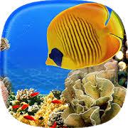 aquarium live wallpaper fish tank