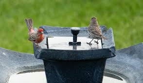 10 Best Bird Baths Reviewed And Rated In 2020
