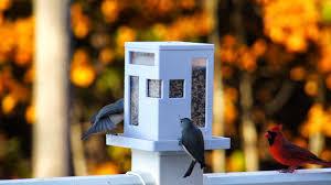 Food Fashion Home Modern Bird Feeder On Deck Post Diy