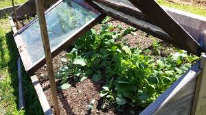 raised bed into a cold frame
