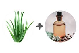 use aloe vera gel for hair growth