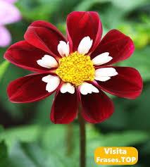 Fotos, Imágenes de Flores ❤️ hermosas, bonitas con frases