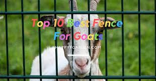 10 Best Fence For Goats That Will Keep Your Animal Jumping